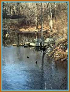 Batson River and Wood Ducks